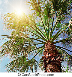 palm tree on background of blue sky