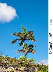 Palm tree on beach Fuerteventura