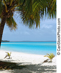Palm Tree on Beach - Tropical Beach in the Cook Islands