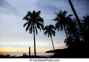Palm tree on beach with silhouette.