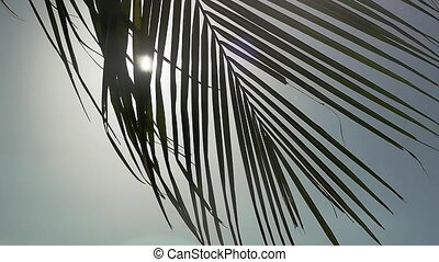 Palm tree on blue sky background moving on wind through the...