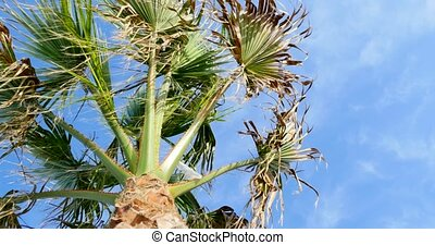 Palm tree on blue sky background