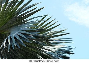 palm tree on blue sky.