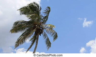 palm tree on blue sky