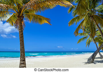 Palm Tree on Exotic Beach at Tropical Island