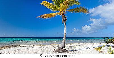 Palm tree on exotic beach