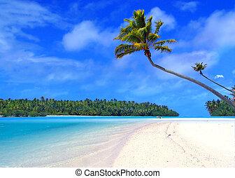 One Foot Island - Palm Tree on One Foot Island