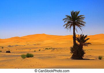 palm tree on Sahara desert (Erg Chebbi, Morocco)