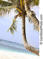 palm tree on sand beach