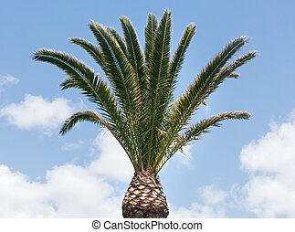 Palm tree on sky background.