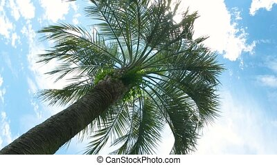 Palm tree on sky background.