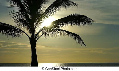 Palm tree on the background of the ocean.