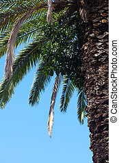 palm tree on the backgroundsouthern blue sky