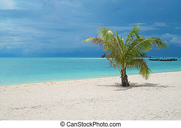 Palm tree on the beach over lagoon sea water