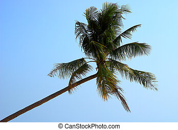 Palm tree on the blue sky background