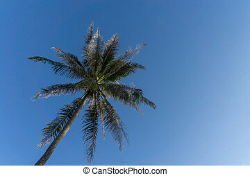 Palm tree on the blue sky background.