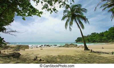 Palm tree on the shore of a deserted tropical sea. Beach in non-tourist season