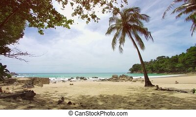 Palm tree on the shore of deserted tropical sea. Beach in non-tourist season