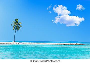 Palm tree on tropical island at ocean. Maldives.
