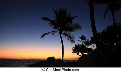 Palm tree - Palm Tree at sunrise