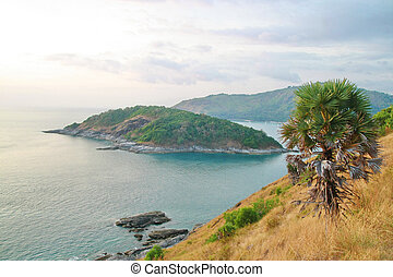 Palm tree, Phromthep cape viewpoint with blue sky Phuket, Thailand