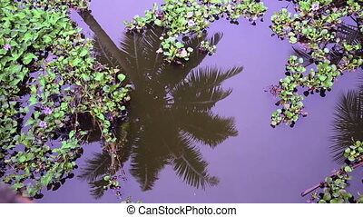 Palm tree reflecting in canal