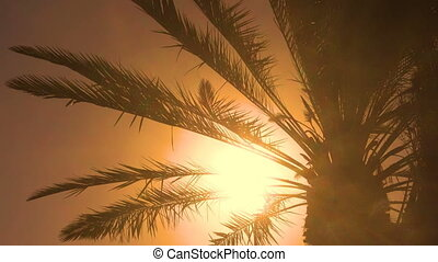 Palm tree - seamless loop - Palm tree leaves in the wind -...