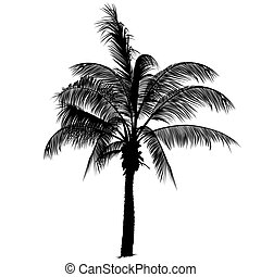 Palm tree silhouette 2 - Highly detailed black silhouette