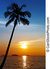 Palm tree silhouette at sunset, Chang island, Thailand