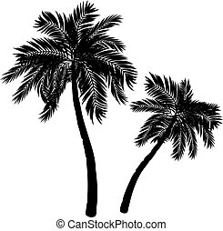 Palm Tree Silhouette - Black silhouette of a tropical palm...