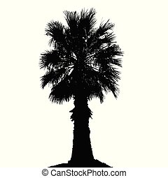 Palm tree silhouette on white background