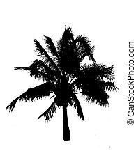 Palm tree silhouette - A silhouette of a palmtree