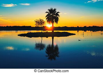 Palm tree silhouette with reflection in a lake at sunset in Africa