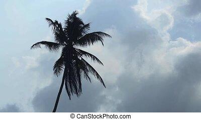 Palm Tree Silhouetted against Cloudy Sky in Sri Lanka -...