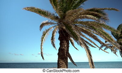 Palm tree stands in front of the sea. The camera moves the view from a palm tree to the sea. Mediterranean Sea