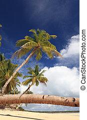 Palm tree stem detail on tropical beach