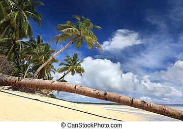 Palm tree stem on tropical paradise beach