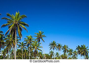 Palm tree on the sky