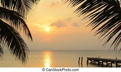 Palm Tree Sunrise Landscape - Palm trees frame the golden...