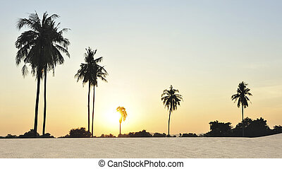 Palm tree sunset in the beach