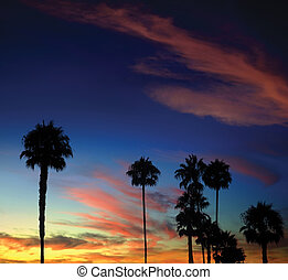 Tropical sunset with palm trees in the foreground