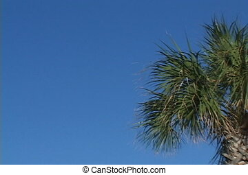 Palm Tree To Sky