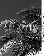 Palm tree under a blue sky in Miami Beach in black and white