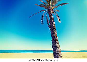 Palm tree under a clear sky