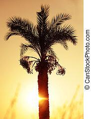Palm tree under sunset at sea.