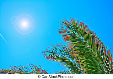 palm tree under the sun