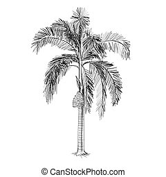 palm tree vector - hand drawn