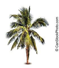 Palm tree. Vector illustration