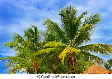 Palm tree with a beautiful bluw sky