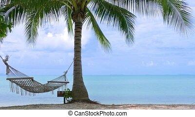 Palm tree with hammock on the beach